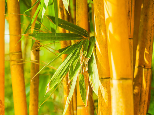 Товары из Бамбука